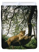 A Lion Panthera Leo Relaxes On A Tree Duvet Cover