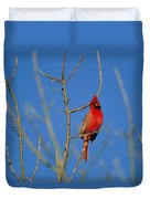 A Male Cardinal Sings In A Suburban Duvet Cover