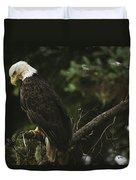 A Mature Bald Eagle Is Perched Atop Duvet Cover
