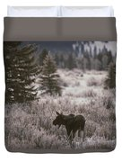 A Moose In A Frost-covered Field, Grand Duvet Cover