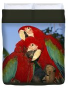 A Pair Of Captive Red-and-green Macaws Duvet Cover