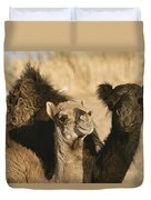 A Pair Of Dromedary Camels Pose Proudly Duvet Cover
