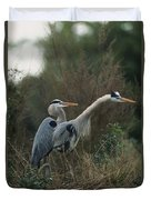 A Pair Of Great Blue Herons Stand Duvet Cover