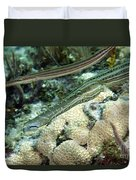 A Pair Of Trumpetfish Off The Coast Duvet Cover
