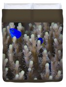 A Pair Of Yellowtail Damselfish Amongst Duvet Cover