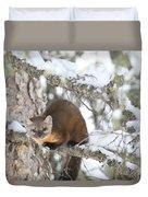 A Pine Marten Looks For Food Duvet Cover