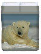 A Polar Bear, Ursus Maritimus, Lounges Duvet Cover