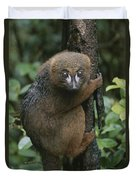 A Red-bellied Lemur Clings To A Tree Duvet Cover