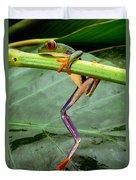A Red-eyed Tree Frog, Agalychnis Duvet Cover