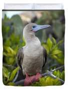 A Red-footed Booby Sula Sula Galapagos Duvet Cover