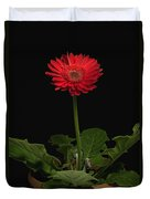A Red Gerbera In A Pot Duvet Cover