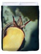 A Red Lip Triton Snail Charonia Duvet Cover