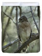A Red Shouldered Hawk Perches In A Tree Duvet Cover