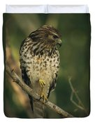 A Red Shouldered Hawk Perches On A Tree Duvet Cover