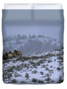 A Reintroduced Wolf Chases A Herd Duvet Cover