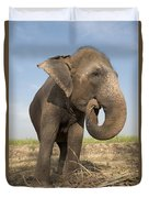 A Rescued Asian Elephant Eats Sugar Duvet Cover