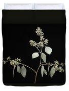 A Seeded Eucalyptus Eucalyptus Cinerea Duvet Cover