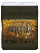 A Stand Of Aspen Trees Displaying Duvet Cover