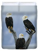 A Trio Of American Bald Eagles Perched Duvet Cover