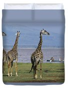 A Trio Of Giraffes Near The Edge Duvet Cover