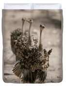 A Trio Of Ostriches, Struthio Camelus Duvet Cover