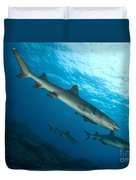 A Trio Of Whitetip Reef Sharks, Kimbe Duvet Cover