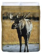 A Young Bull Moose Duvet Cover