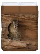 A Young Mountain Lion Rests In A Rocky Duvet Cover