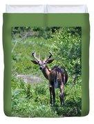 Acadia Buck Duvet Cover
