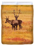 Adult Caribou In The Fall Colours Duvet Cover