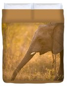 African Elephant Loxodonta Africana Duvet Cover