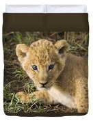 African Lion Panthera Leo Five Week Old Duvet Cover