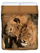 African Lion Panthera Leo Two Males, Mt Duvet Cover