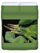 African Male Jacksons Chameleon Duvet Cover