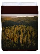 Afternoon Sunlight Bathes Redwood Trees Duvet Cover