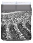 Agriculture- Soybeans 4 Duvet Cover