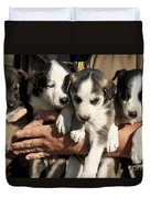 Alaskan Huskey Puppies Duvet Cover by John Greim