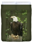 An American Bald Eagle Perches Atop Duvet Cover