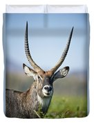 An Antelope Standing Amongst Tall Duvet Cover