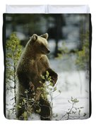 An Brown Bear Ursus Arctos Runs Duvet Cover