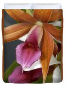 An Orchid, Probably A Cattleya Hybrid Duvet Cover