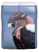 Andean Condor Vultur Gryphus Adult Male Duvet Cover