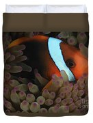Anemonefish In Purple Tip Anemone Duvet Cover