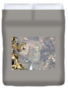 Anemones And Shells Duvet Cover