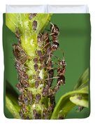 Ant Formicidae Pair Protecting Aphids Duvet Cover
