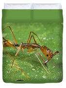 Ant Showing Large Mandibles Guyana Duvet Cover