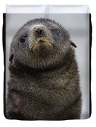 Antarctic Fur Seal Arctocephalus Duvet Cover