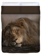 Asian Lion Panthera Leo Persica Duvet Cover