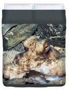 Atlantic Octopus In Shell Debris Duvet Cover
