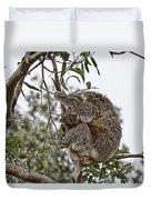 Baby Koala Duvet Cover